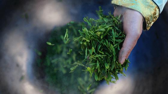 cách pha trà long tỉnh tây hồ tuyệt hảo