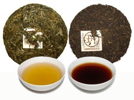 Cách lựa chọn trà phổ nhĩ ngon và không bị nấm mốc 1