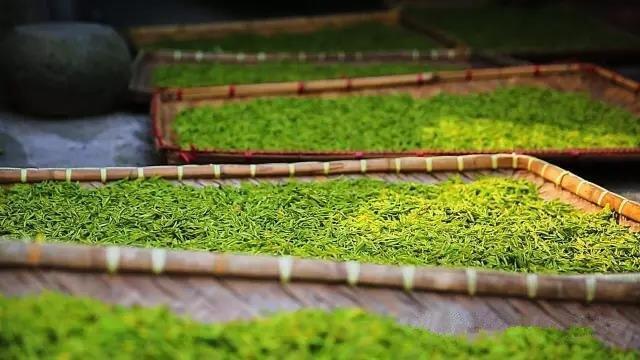 quy trình sản xuất trà trắng an cát