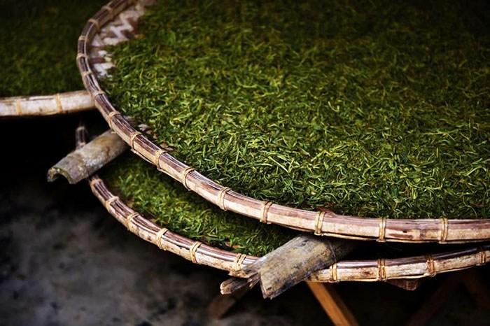 quy trình sản xuất trà thiết quan âm thanh hương