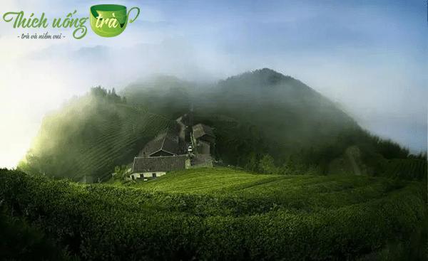 lịch sử phát triển trà ân thi ngọc lộ