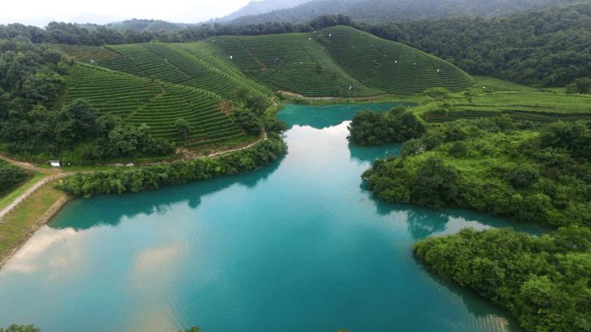 trà long tỉnh tây hồ