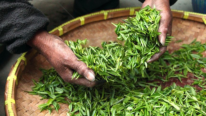 các bước chế biến trà xanh