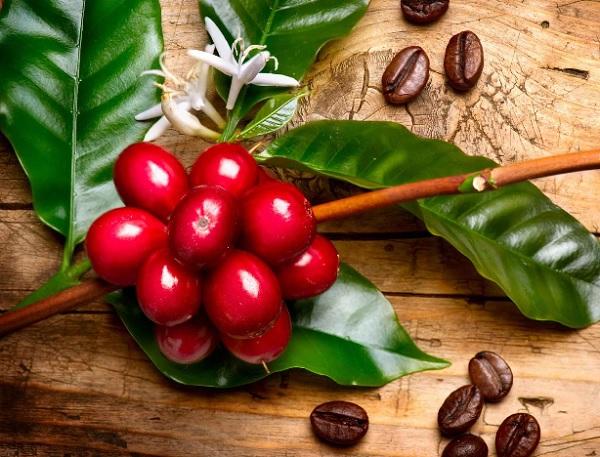 Cà phê nào tốt cho cơ thể của bạn