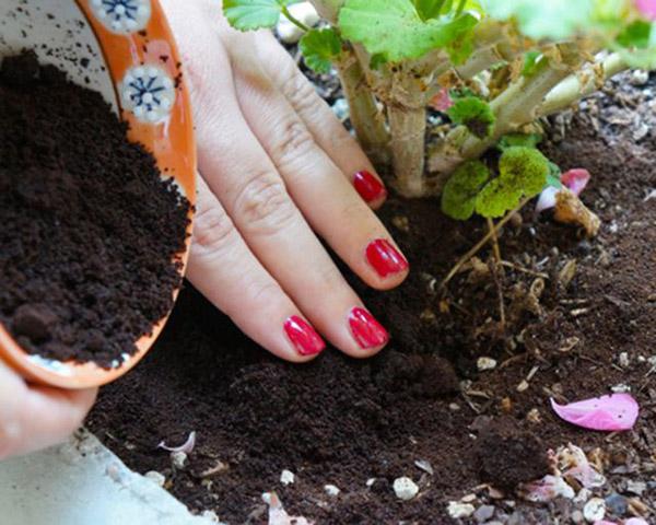 Tác dụng của bã cà phê khi làm phân bón cho cây trồng