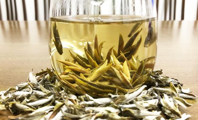 Bạch trà là gì và những công dụng tuyệt vời không phải ai cũng biết 6