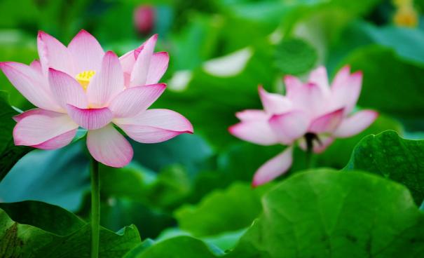 Những Giá Trị Của Thơ Thiền Giúp Phát Triển Tâm – Trí Cho Con Người 33