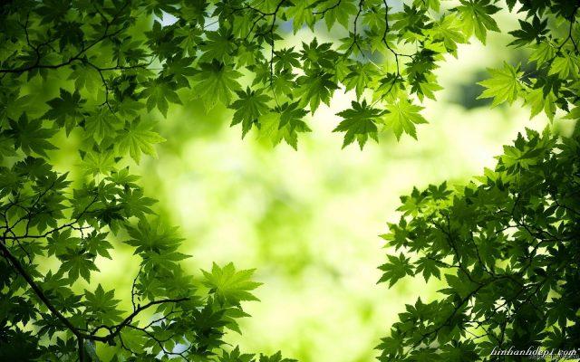 Nhang Thuốc Nam - Nhang Thiền Vô Ưu hương nhẹ nhàng thanh tao, hương lan toả 12